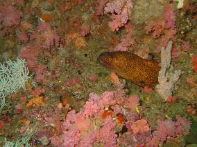 schönes riff mit korallen