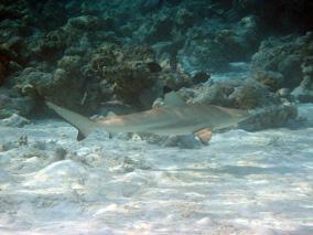 brauchen haie tatsächlich schutz